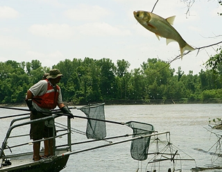 When even Asian carp won't jump in for a ride, you know it's time for a change. (Photo: WikiMedia Commons)