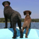 Pocket Cruising: Small Boat, Big Dog